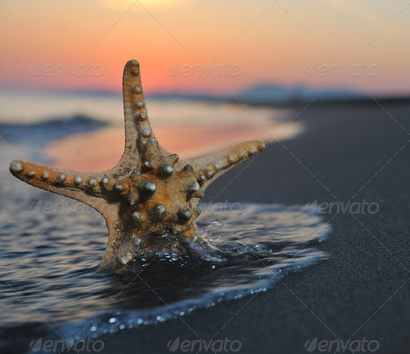 summer beach sunset with star on beach - Stock Photo - Images