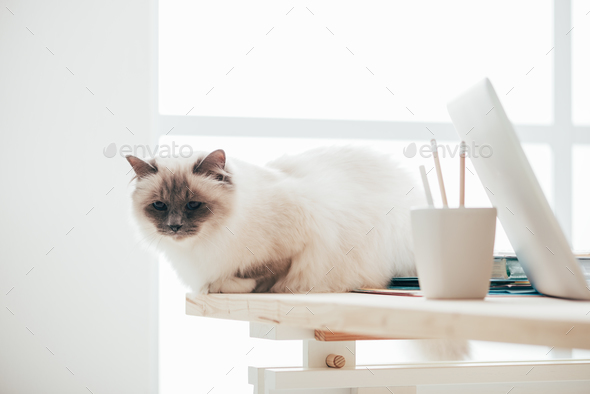 Lovely cat sitting on the desk - Stock Photo - Images