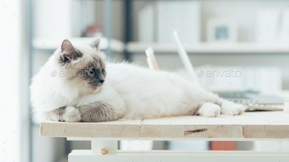 Lovely cat on the desktop - Stock Photo - Images