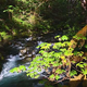 Rain Forest - VideoHive Item for Sale