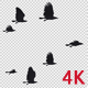 22 Black Birds Flock Flying Cycle II 4K - VideoHive Item for Sale