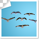 Group Of Flying Birds Top View - VideoHive Item for Sale
