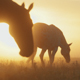 Horses Walking and Grazing in Sunrise - VideoHive Item for Sale
