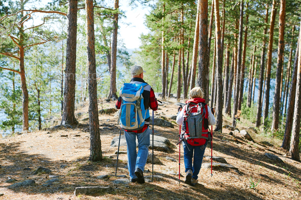 Trekking in the forest - Stock Photo - Images