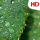 Green Leaf 0499 - VideoHive Item for Sale