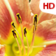 Flower In Nature 0504 - VideoHive Item for Sale