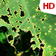 Green Leaf 0516 - VideoHive Item for Sale