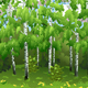 Spring Birch Trees - GraphicRiver Item for Sale