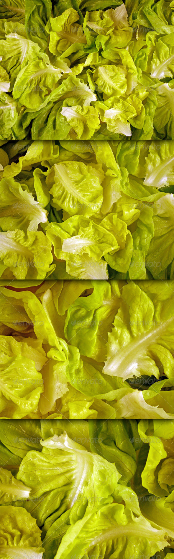 Lettuce Leaves - Nature Textures