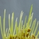 Growing Green Plants - VideoHive Item for Sale