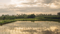 Beautiful view of rice paddy field