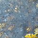 Burned Pine Forest In Antalya - VideoHive Item for Sale