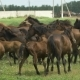 Herd Of Horses Running On The Pasture In Autumn - VideoHive Item for Sale