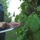 Farmer In Vineyard - VideoHive Item for Sale