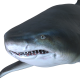 Sand Tiger Shark Pack 2 - VideoHive Item for Sale