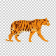 Tiger Walk Cycle - VideoHive Item for Sale