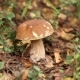 Picking Mushrooms In The Forest - VideoHive Item for Sale