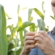 Farmer Inspecting His Corn In The Field, Looking At Camera, - VideoHive Item for Sale