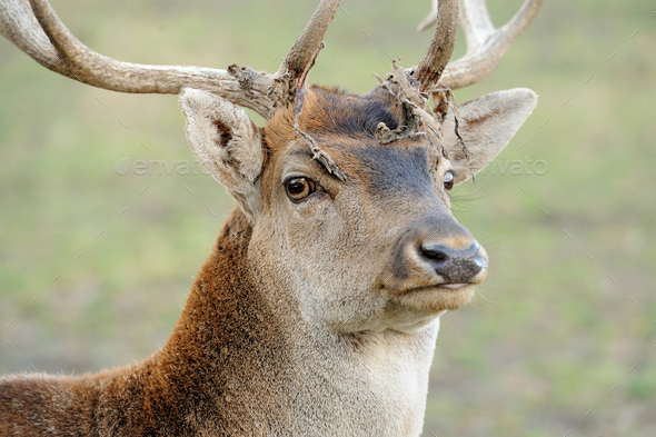Deer in forest - Stock Photo - Images