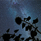Night Sky Milky Way Galaxy In Sunflowers - VideoHive Item for Sale