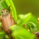 Chafer Creeps On The Green Sheet - VideoHive Item for Sale