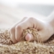 Male Farmers Hand Pouring Malt Or Cereal Grains - VideoHive Item for Sale