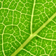 Green leaf veins 04 - GraphicRiver Item for Sale
