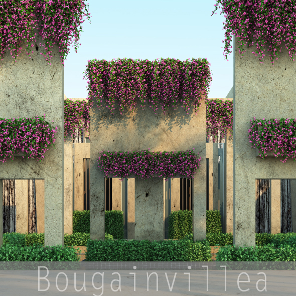 Bougainvillea - 3DOcean Item for Sale