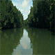 Boat Ride Through Forest River - VideoHive Item for Sale