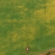 Aerial Shot Tractor Sprayers Lays on the Field With a Canola - VideoHive Item for Sale
