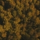 Autumn Forest,aerial View. - VideoHive Item for Sale