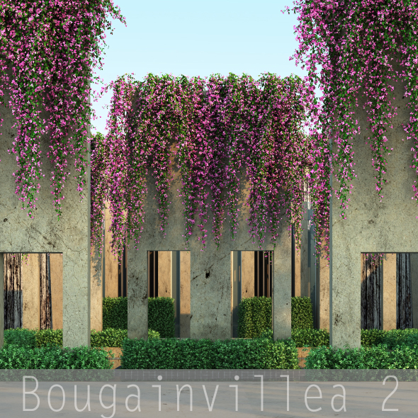 Bougainvillea 2 - 3DOcean Item for Sale