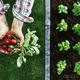 Organic farming and gardening - PhotoDune Item for Sale