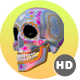 HD Sugar Candy Skulls - 12 Clips + 6 Transitions - VideoHive Item for Sale