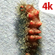 Living Caterpillar 655 - VideoHive Item for Sale