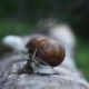 Snail On a Log In The Wood - VideoHive Item for Sale
