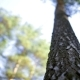 Trunk Of a Pine, Pine Bark, Wood - VideoHive Item for Sale