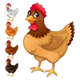 Group of Hens in Different Colors - GraphicRiver Item for Sale