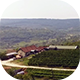 Aerial Winery - VideoHive Item for Sale