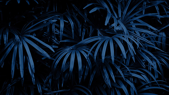 Jungle Plants Swaying At Night By Rockfordmedia Videohive