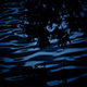 Plants Reflect in Lake at Night - VideoHive Item for Sale