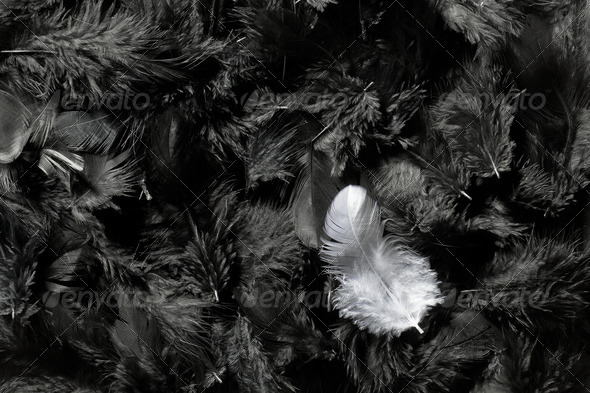 white and black feathers - Stock Photo - Images