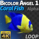 Fish Bicolor Angelfish 1 - VideoHive Item for Sale