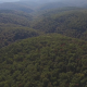 Flying Above Deep Forest Wilderness - VideoHive Item for Sale