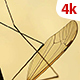 Insect Analysis 657 - VideoHive Item for Sale