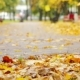 Beautiful Nature Scene Of Autumn Leaves - VideoHive Item for Sale