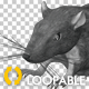 Rat - Run Jump Cycle - Front Angle
