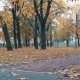 Skater With Paper Cup Walking In The Autumn Park Stands On Skateboard And Continue Pushing - VideoHive Item for Sale