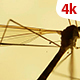 Insect Analysis 661 - VideoHive Item for Sale