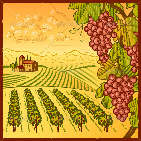 Vineyard Landscape - Landscapes Nature
